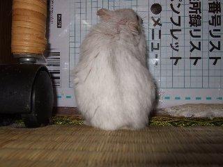'07 blog用 0382.jpg