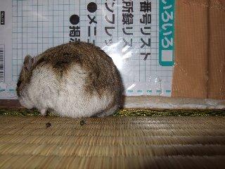 '08 blog用 0111.jpg