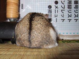 '08 blog用 0112.jpg