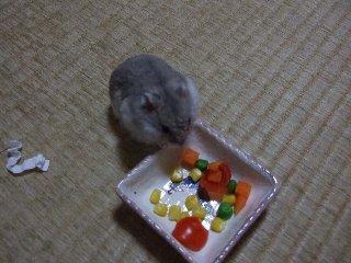 '08 blog用 0225.jpg